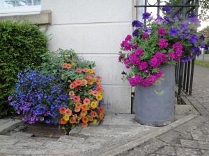 Flowers July 2014